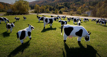 Cows from Bing